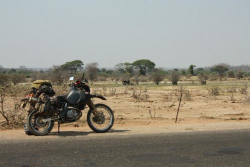 Elephants on the side of the road in Zambia.